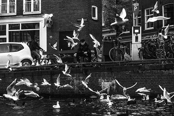 Amsterdam: Old man feeding birds by a canal.