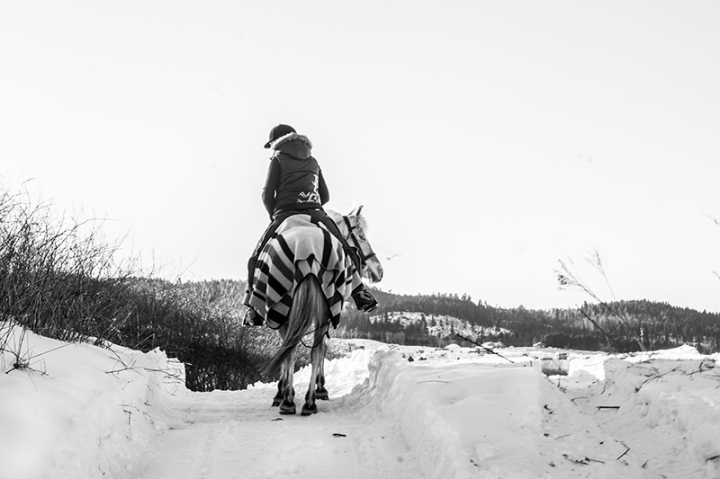 Undecided horse and rider - winter landscape, snow field - Norway