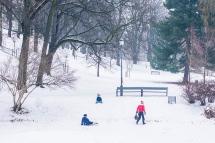 children winter sliding a st hanshaugen park in oslo