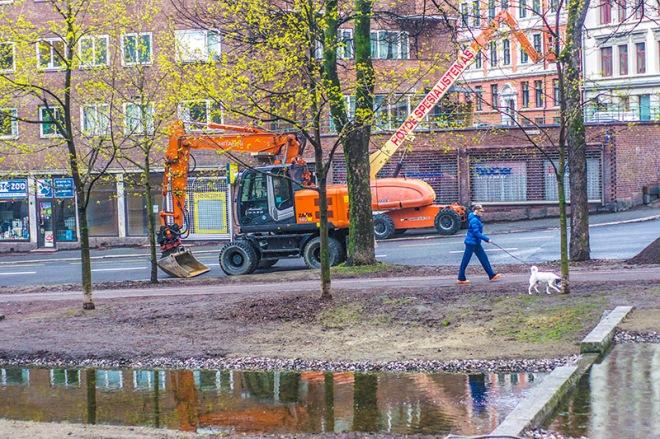 Fancy orange in Oslo - dogwalking