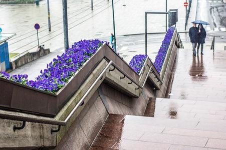 couple in the rain, more flowers - aker brygge