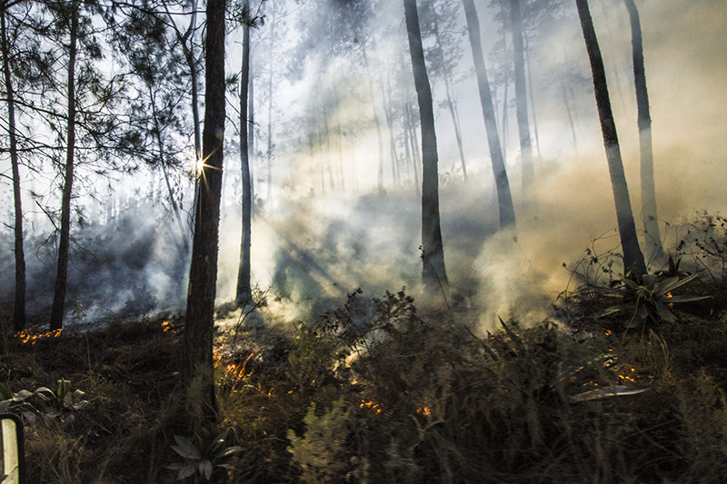 foret des pins - forest fire 1