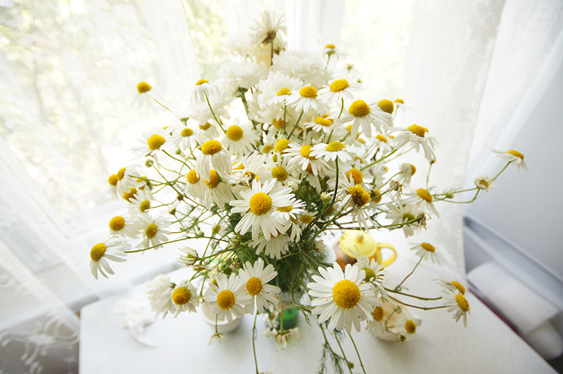 summer bouquet chamomile