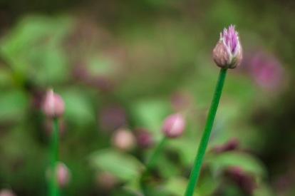 backyard flower