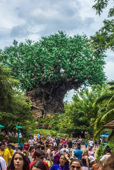 Animal Kingdom – Disney World