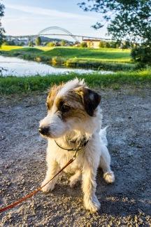 Milli Posing with Fredrikstad Bridge