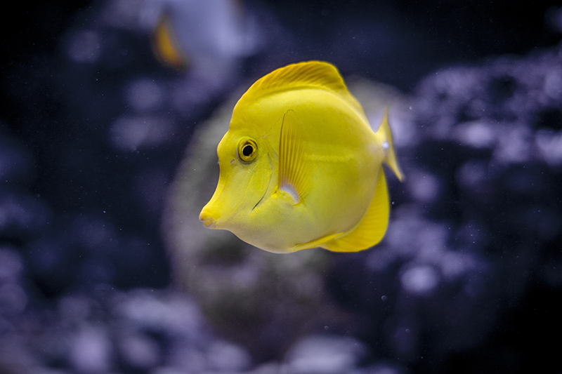 happy yellow fish