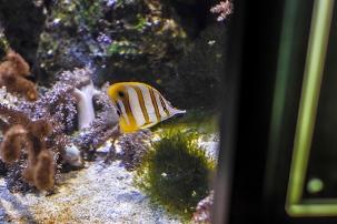 elusive fish
