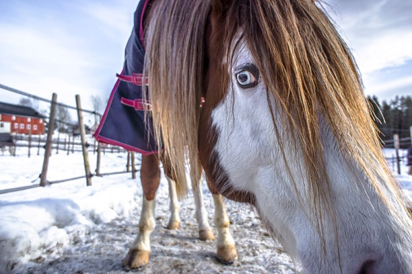 silver eyed horse
