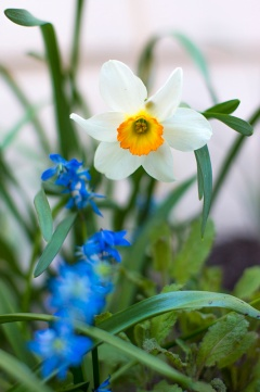 flowers in my backyard