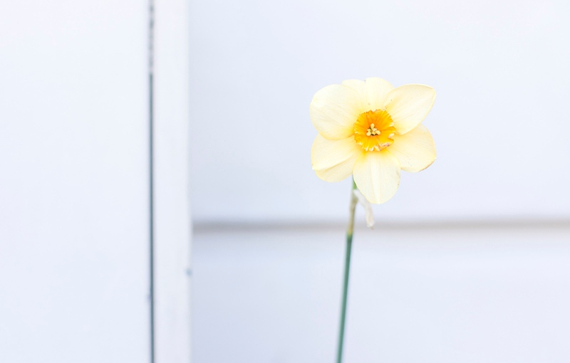 BackyardFlower Spring Tradition