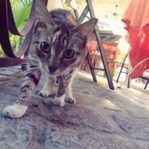 just cute cat ;-3