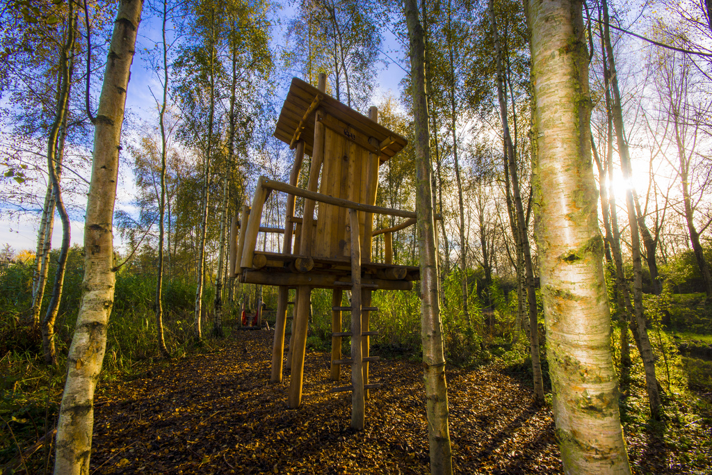 to be a kid and live a tree house