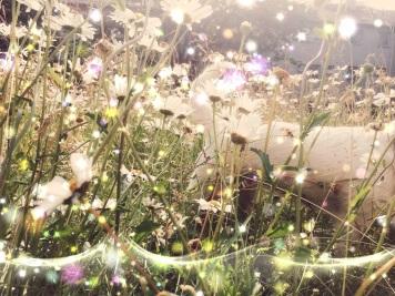 doggy bliss // Milli-summer