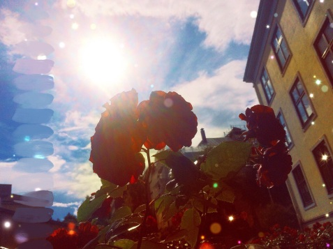 sunshine, roses, vacation - what more do you need?