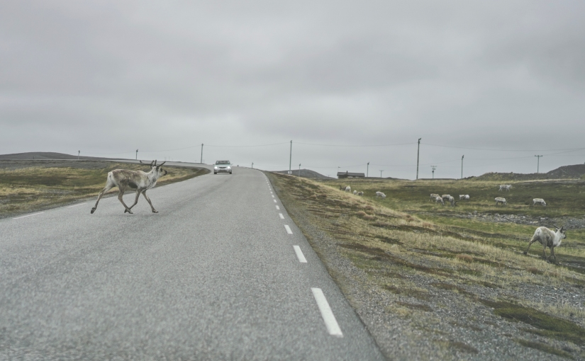 The weirdest Vardø